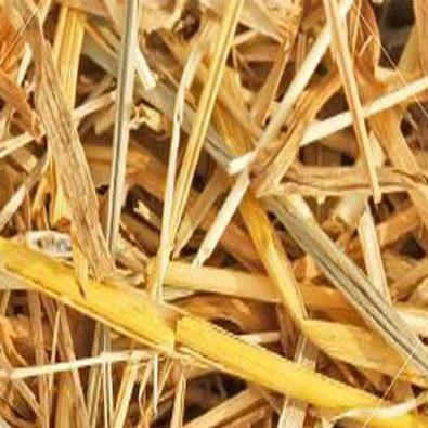 barleystraw