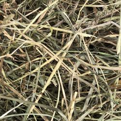 Stalky Hay